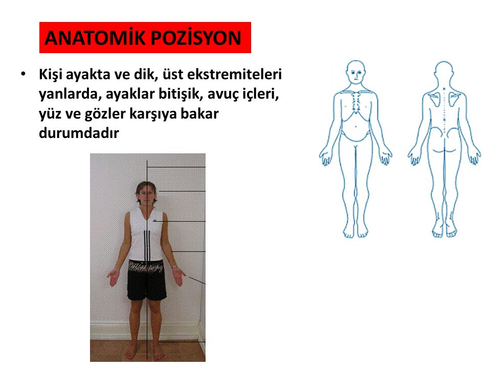 ANATOMİK DÜZLEMLER Bütün anatomik tarifler, anatomik pozisyondaki bir insanın vücudundan geçen hayali düzlemlerle ilişkisine göre yapılır.