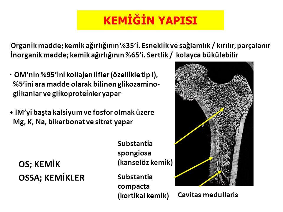KEMİĞİN YAPISI Substantia spongiosa (kanselöz kemik) Substantia compacta (kortikal kemik) Organik madde; kemik ağırlığının %35'i. Esneklik ve sağlamlı