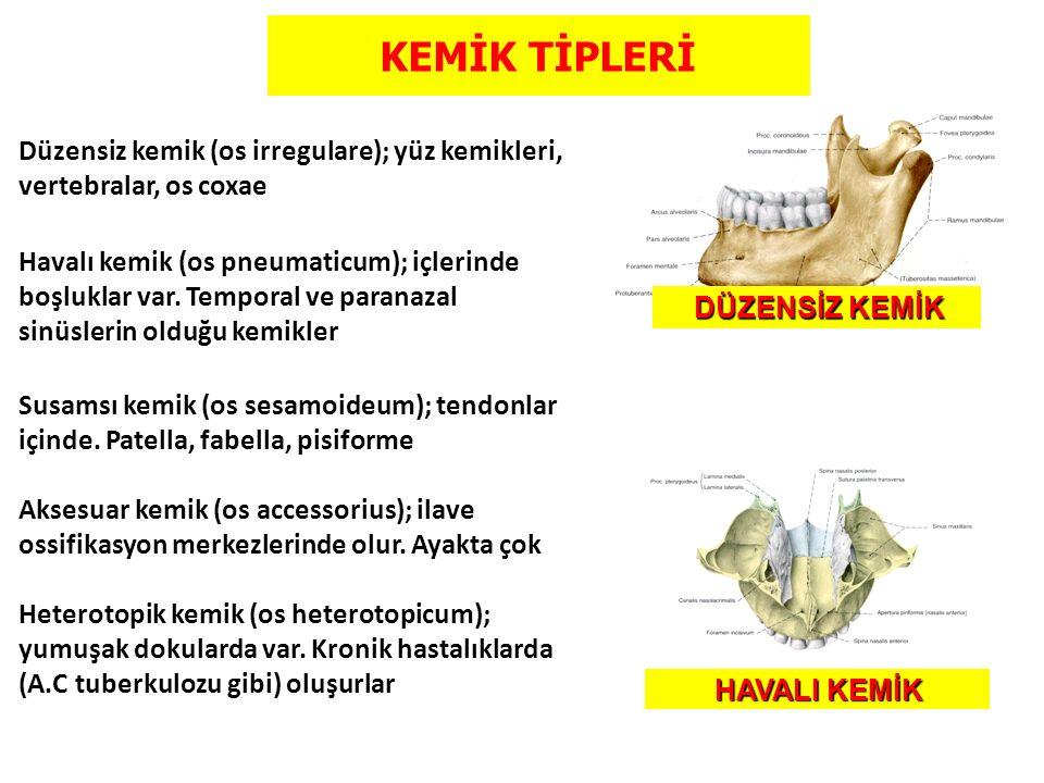 KEMİK TİPLERİ Düzensiz kemik (os irregulare); yüz kemikleri, vertebralar, os coxae Havalı kemik (os pneumaticum); içlerinde boşluklar var. Temporal ve