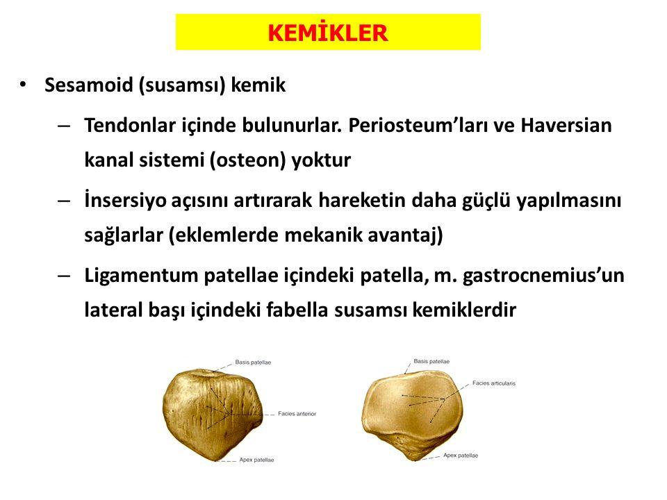 KEMİKLER Sesamoid (susamsı) kemik – Tendonlar içinde bulunurlar. Periosteum'ları ve Haversian kanal sistemi (osteon) yoktur – İnsersiyo açısını artıra