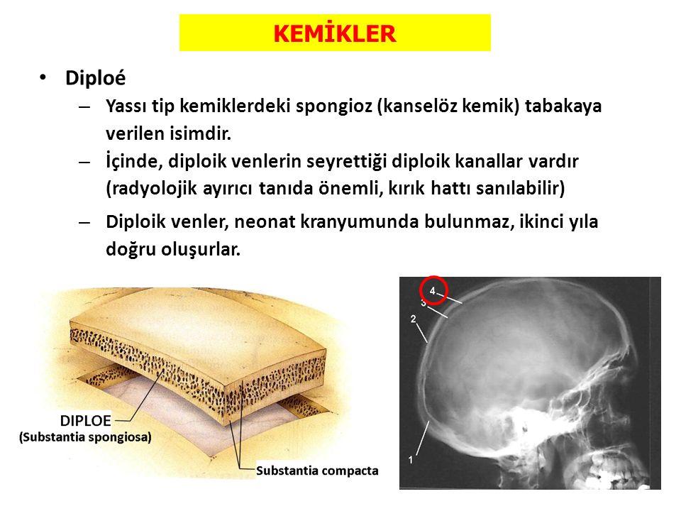 KEMİKLER Diploé – Yassı tip kemiklerdeki spongioz (kanselöz kemik) tabakaya verilen isimdir. – İçinde, diploik venlerin seyrettiği diploik kanallar va