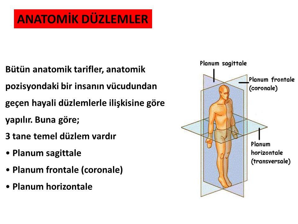 ANATOMİK DÜZLEMLER Bütün anatomik tarifler, anatomik pozisyondaki bir insanın vücudundan geçen hayali düzlemlerle ilişkisine göre yapılır. Buna göre;