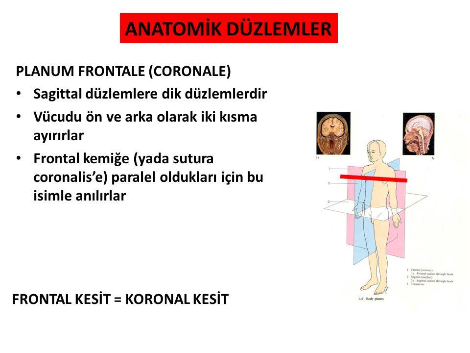 PLANUM FRONTALE (CORONALE) Sagittal düzlemlere dik düzlemlerdir Vücudu ön ve arka olarak iki kısma ayırırlar Frontal kemiğe (yada sutura coronalis'e)