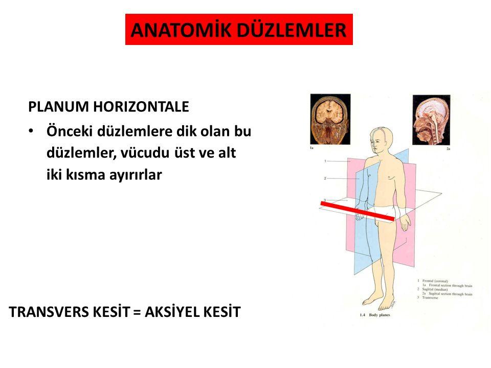 HAREKET TERİMLERİ EXTENSIO; sagittal düzlemde yapılan, vücut kısımları arasındaki açıyı artıran harekettir Normalden fazla yapılan fleksiyon; HİPERFLEKSİYON, normalden fazla yapılan ekstensiyon; HİPEREKSTENSİYON