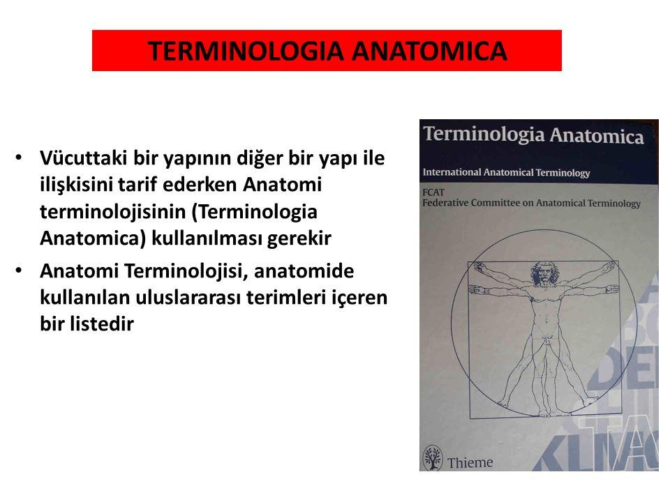 Vücuttaki bir yapının diğer bir yapı ile ilişkisini tarif ederken Anatomi terminolojisinin (Terminologia Anatomica) kullanılması gerekir Anatomi Termi