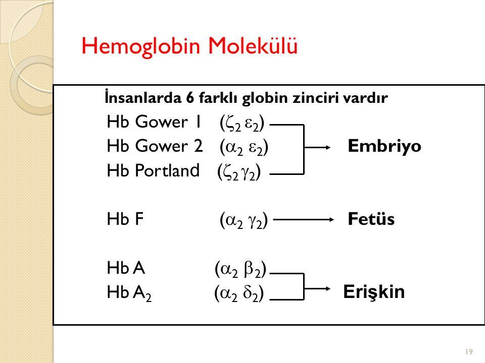 19 Hemoglobin Molekülü İ nsanlarda 6 farklı globin zinciri vardır Hb Gower 1 (  2  2 ) Hb Gower 2 (  2  2 ) Embriyo Hb Portlan d (  2  2 ) Hb F (  2  2 ) Fetüs Hb A (  2  2 ) Hb A 2 (  2  2 ) Erişkin