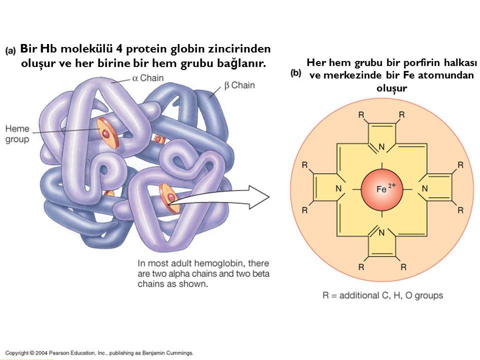 16.10.201520 2+2+ Her hem grubu bir porfirin halkası ve merkezinde bir Fe atomundan oluşur Bir Hb molekülü 4 protein globin zincirinden oluşur ve her birine bir hem grubu ba ğ lanır.