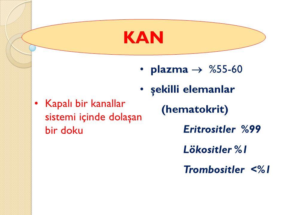 Kapalı bir kanallar sistemi içinde dolaşan bir doku plazma  %55-60 şekilli elemanlar (hematokrit) Eritrositler %99 Lökositler %1 Trombositler <%1 KAN