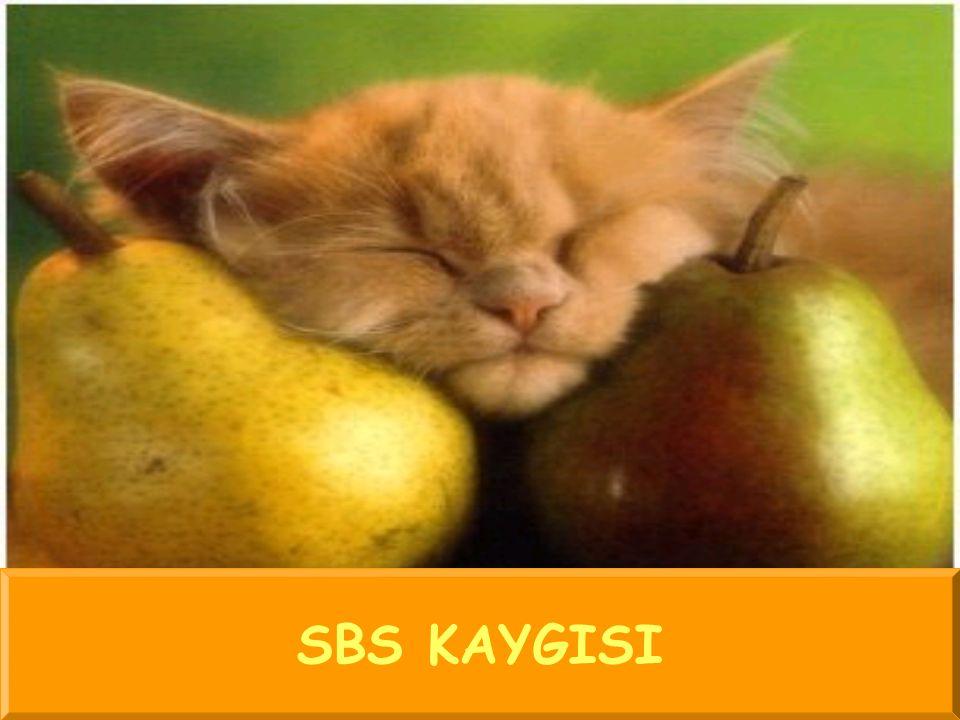 SBS KAYGISI
