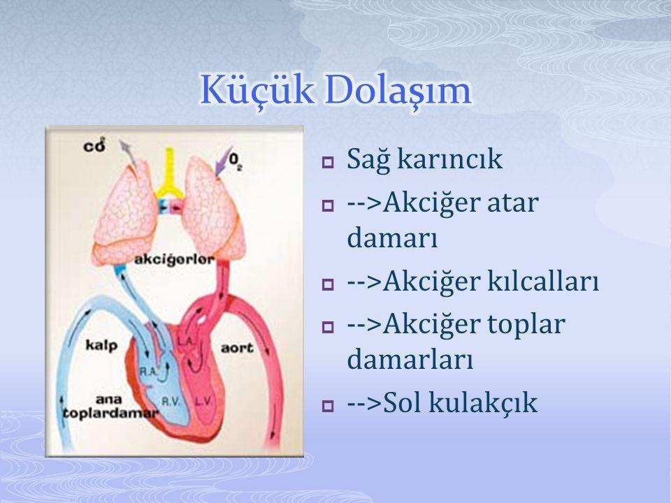  Sağ karıncık  -->Akciğer atar damarı  -->Akciğer kılcalları  -->Akciğer toplar damarları  -->Sol kulakçık
