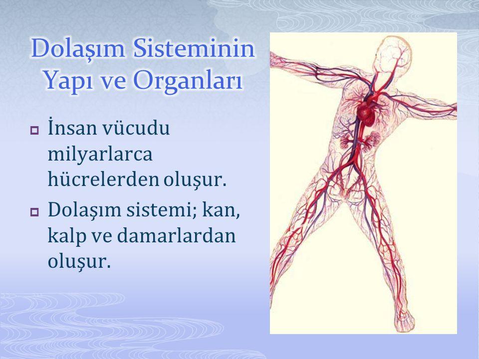  İnsan vücudu milyarlarca hücrelerden oluşur.  Dolaşım sistemi; kan, kalp ve damarlardan oluşur.