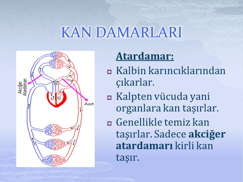 Atardamar:  Kalbin karıncıklarından çıkarlar.  Kalpten vücuda yani organlara kan taşırlar.  Genellikle temiz kan taşırlar. Sadece akciğer atardamar