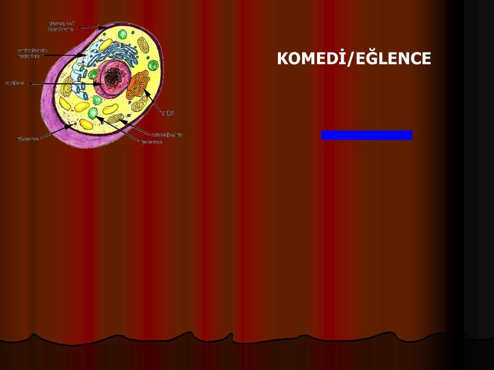 Örnek: Bez hücrelerinde sayısı en fazla olan organel aşağıdakilerden hangisidir.