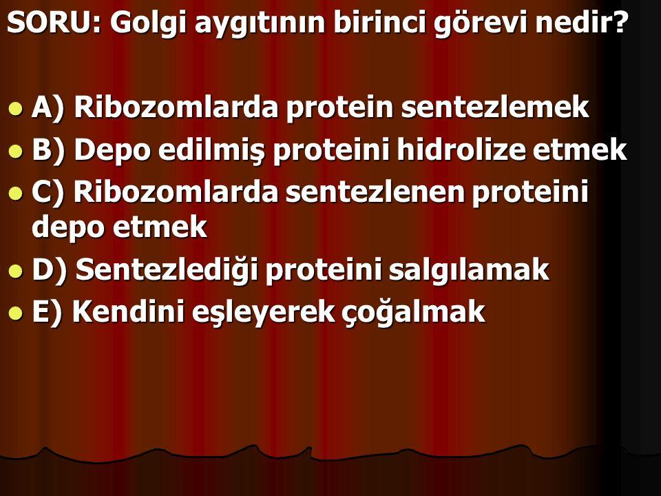 SORU: Golgi aygıtının birinci görevi nedir? A) Ribozomlarda protein sentezlemek A) Ribozomlarda protein sentezlemek B) Depo edilmiş proteini hidrolize