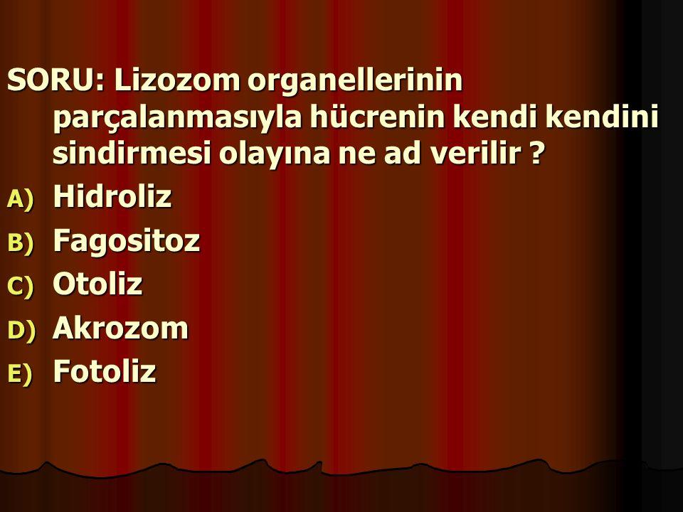 SORU: Lizozom organellerinin parçalanmasıyla hücrenin kendi kendini sindirmesi olayına ne ad verilir ? A) H idroliz B) F agositoz C) O toliz D) A kroz