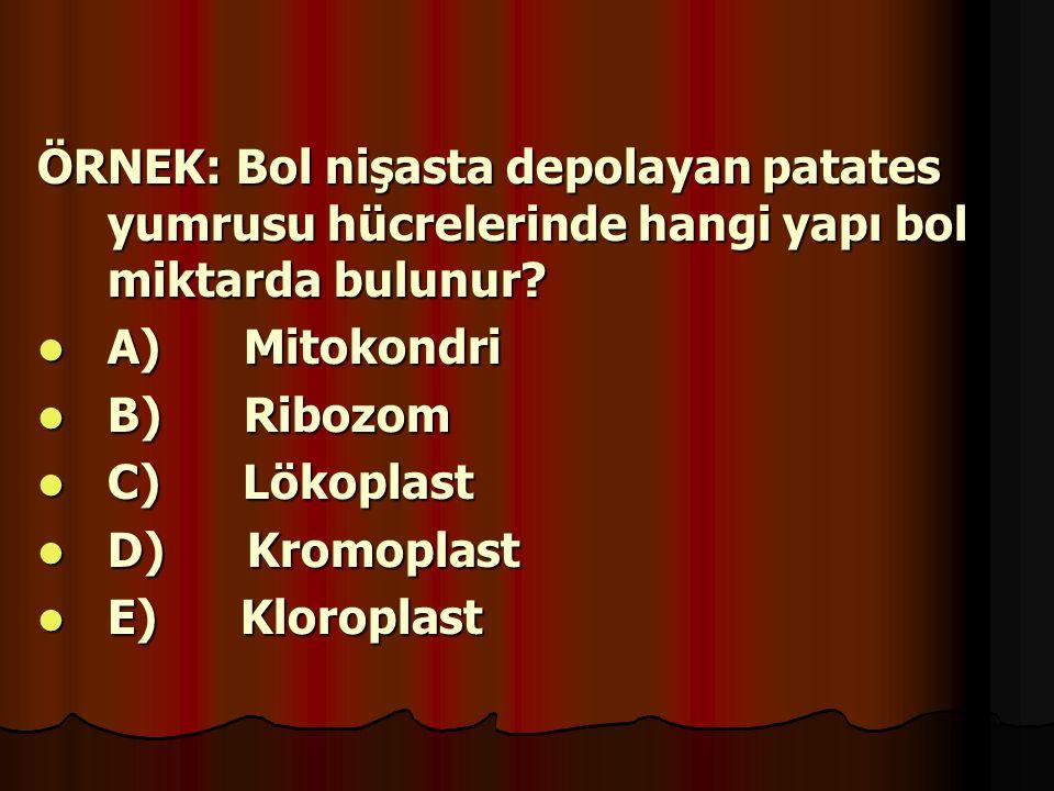 ÖRNEK: Bol nişasta depolayan patates yumrusu hücrelerinde hangi yapı bol miktarda bulunur? A) Mitokondri A) Mitokondri B) Ribozom B) Ribozom C) Lökopl