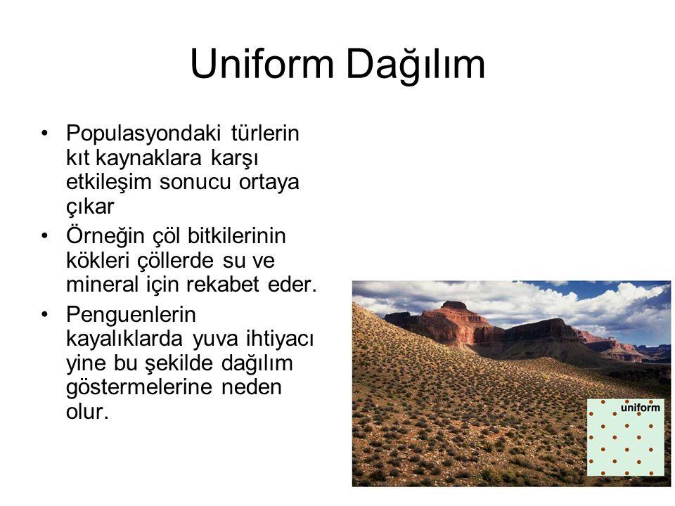 Uniform Dağılım Populasyondaki türlerin kıt kaynaklara karşı etkileşim sonucu ortaya çıkar Örneğin çöl bitkilerinin kökleri çöllerde su ve mineral içi