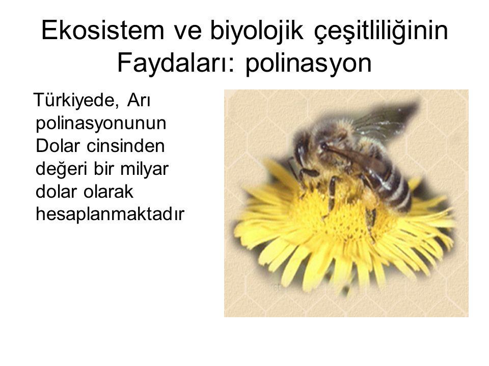 Ekosistem ve biyolojik çeşitliliğinin Faydaları: polinasyon Türkiyede, Arı polinasyonunun Dolar cinsinden değeri bir milyar dolar olarak hesaplanmakta
