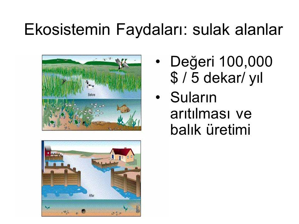 Ekosistemin Faydaları: sulak alanlar Değeri 100,000 $ / 5 dekar/ yıl Suların arıtılması ve balık üretimi