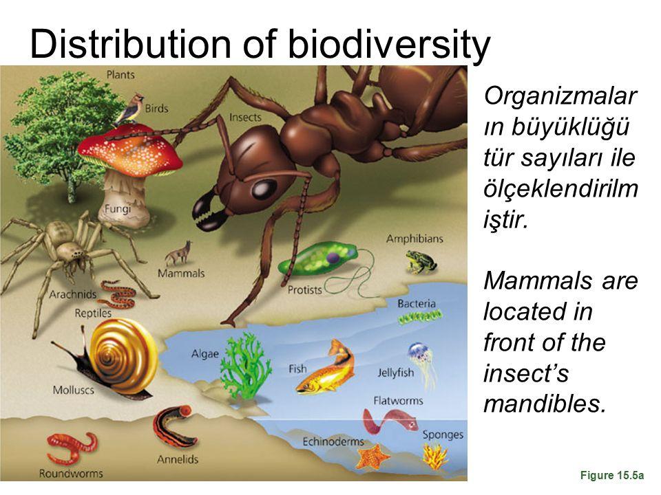 Distribution of biodiversity Organizmalar ın büyüklüğü tür sayıları ile ölçeklendirilm iştir. Mammals are located in front of the insect's mandibles.