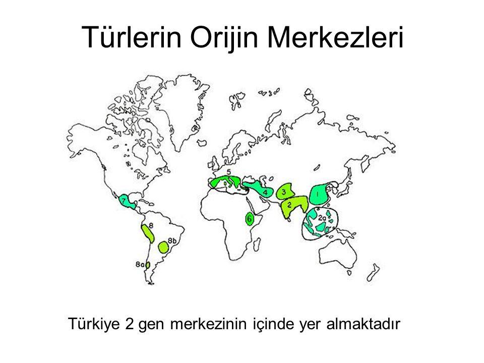 Türlerin Orijin Merkezleri Türkiye 2 gen merkezinin içinde yer almaktadır