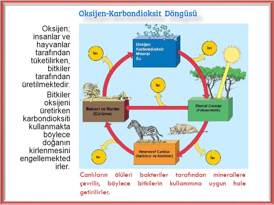 Oksijen-Karbondioksit Döngüsü Oksijen; insanlar ve hayvanlar tarafından tüketilirken, bitkiler tarafından üretilmektedir.