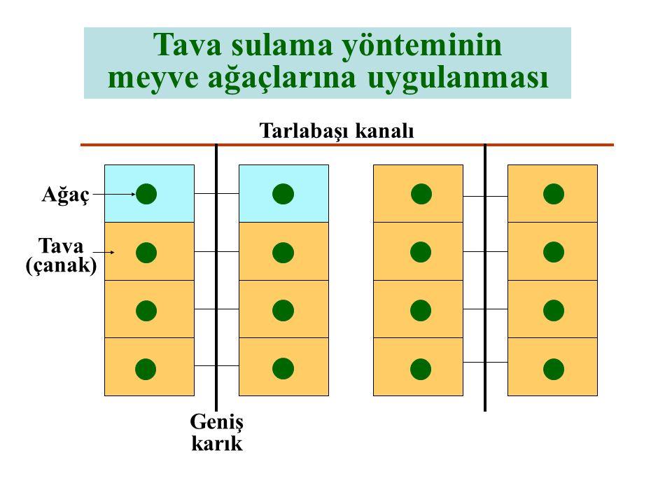 Tarlabaşı kanalı Geniş karık Tava sulama yönteminin meyve ağaçlarına uygulanması Ağaç Tava (çanak)