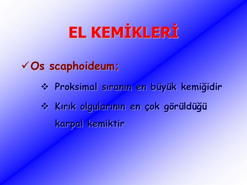 EL KEMİKLERİ Os scaphoideum; Os scaphoideum;  Proksimal sıranın en büyük kemiğidir  Kırık olgularının en çok görüldüğü karpal kemiktir