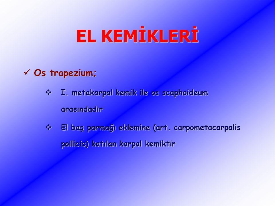 EL KEMİKLERİ Os trapezium; Os trapezium;  I. metakarpal kemik ile os scaphoideum arasındadır  El baş parmağı eklemine (art. carpometacarpalis pollic