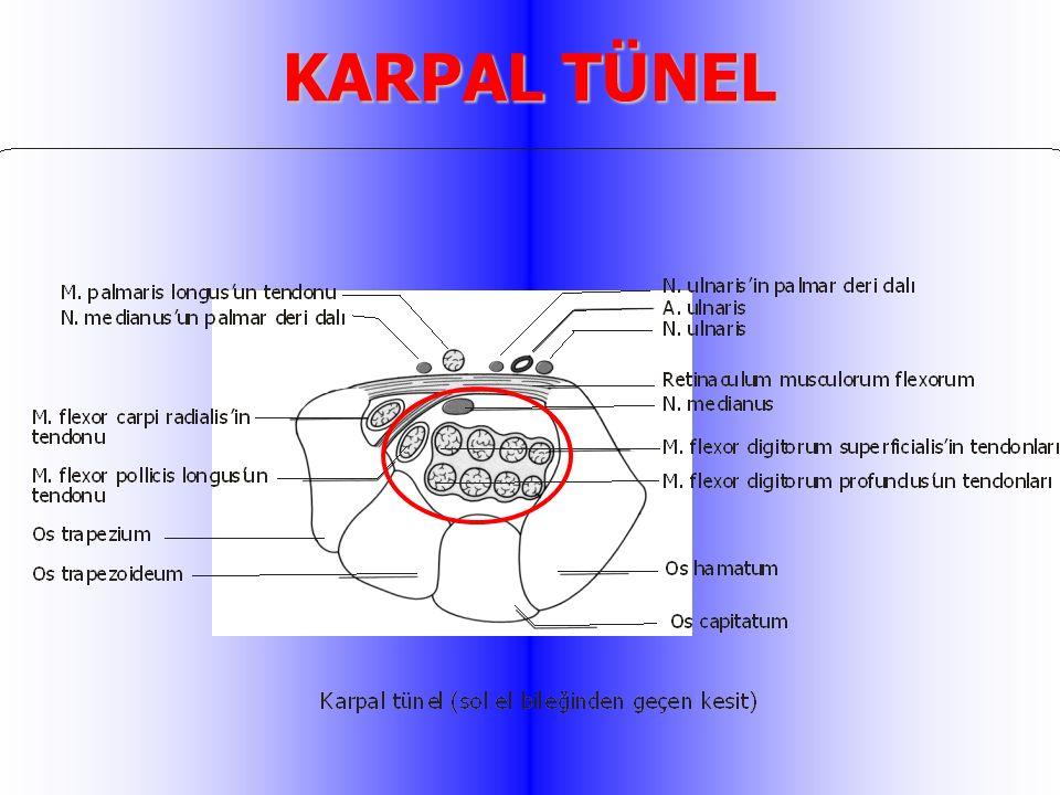 KARPAL TÜNEL