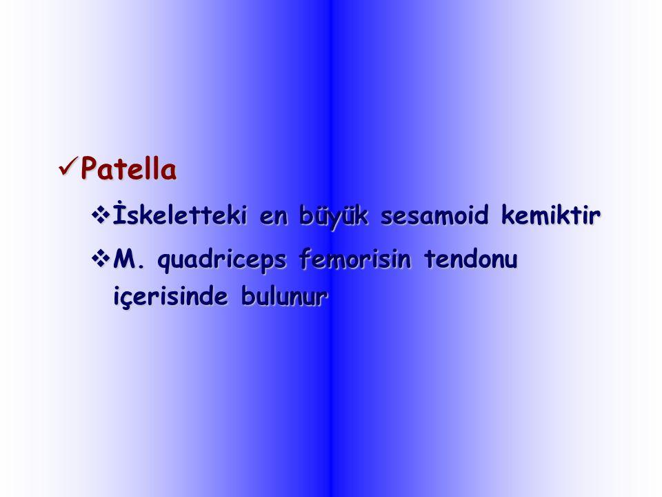 Patella Patella  İskeletteki en büyük sesamoid kemiktir  M. quadriceps femorisin tendonu içerisinde bulunur
