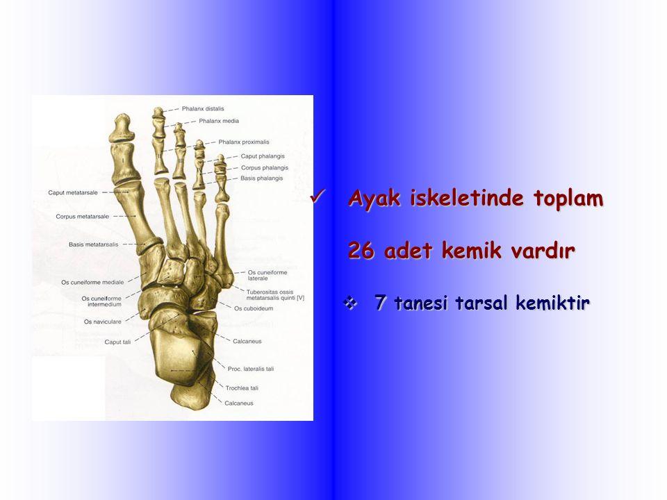 Ayak iskeletinde toplam 26 adet kemik vardır Ayak iskeletinde toplam 26 adet kemik vardır  7 tanesi tarsal kemiktir