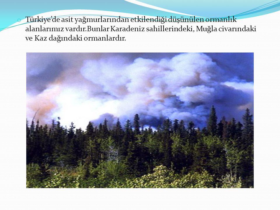 o Türkiye'de asit yağmurlarından etkilendiği düşünülen ormanlık alanlarımız vardır.Bunlar Karadeniz sahillerindeki, Muğla civarındaki ve Kaz dağındaki
