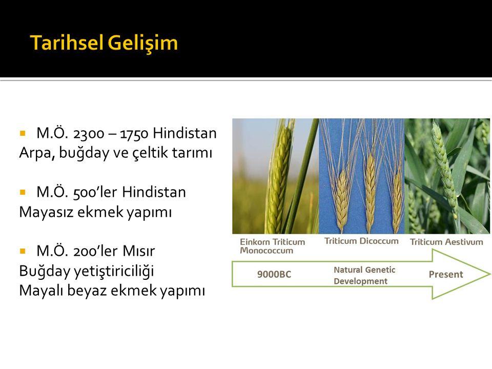  M.Ö.2300 – 1750 Hindistan Arpa, buğday ve çeltik tarımı  M.Ö.