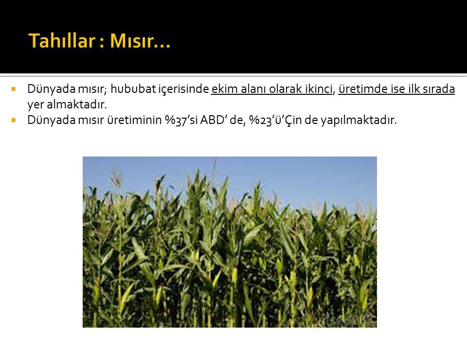  Dünyada mısır; hububat içerisinde ekim alanı olarak ikinci, üretimde ise ilk sırada yer almaktadır.