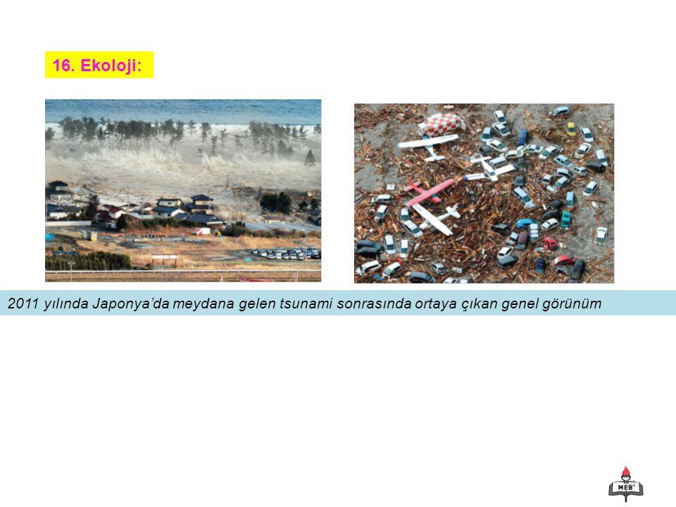 34 16. Ekoloji: 2011 yılında Japonya'da meydana gelen tsunami sonrasında ortaya çıkan genel görünüm