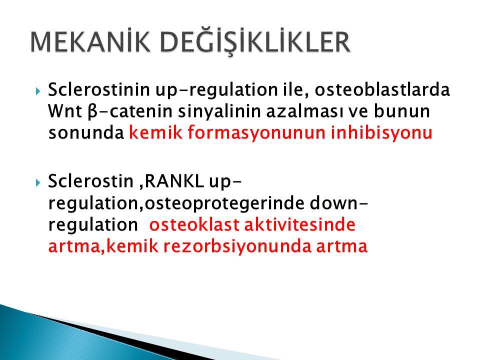  Sclerostinin up-regulation ile, osteoblastlarda Wnt β-catenin sinyalinin azalması ve bunun sonunda kemik formasyonunun inhibisyonu  Sclerostin,RANK