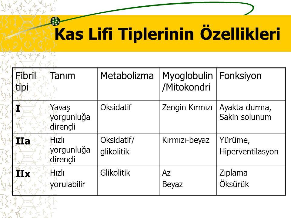 Kas Lifi Tiplerinin Özellikleri Fibril tipi TanımMetabolizmaMyoglobulin /Mitokondri Fonksiyon I Yavaş yorgunluğa dirençli OksidatifZengin KırmızıAyakt
