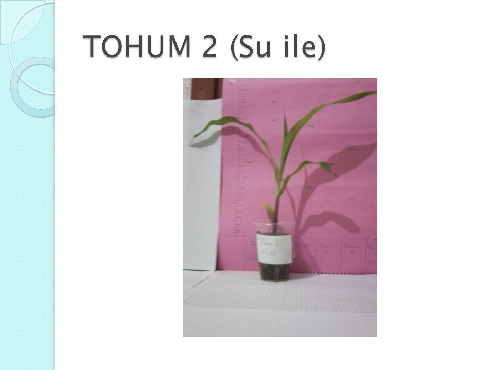 TOHUM 2 (Su ile)