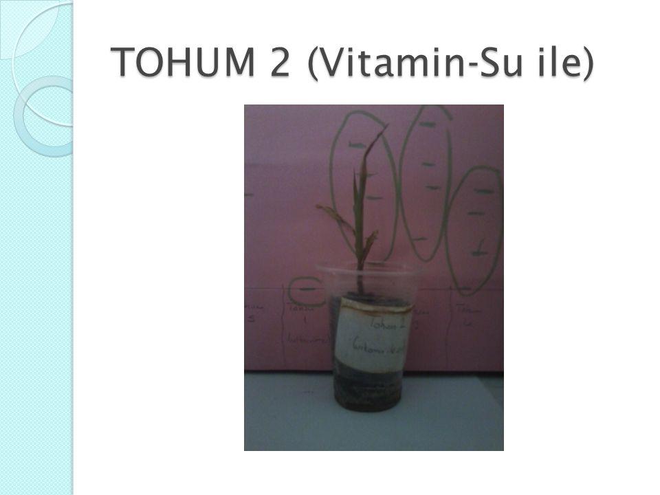 TOHUM 2 (Vitamin-Su ile)