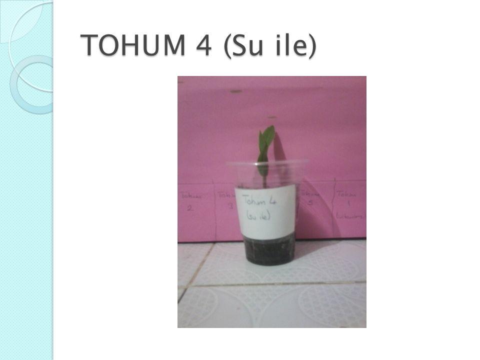 TOHUM 4 (Su ile)