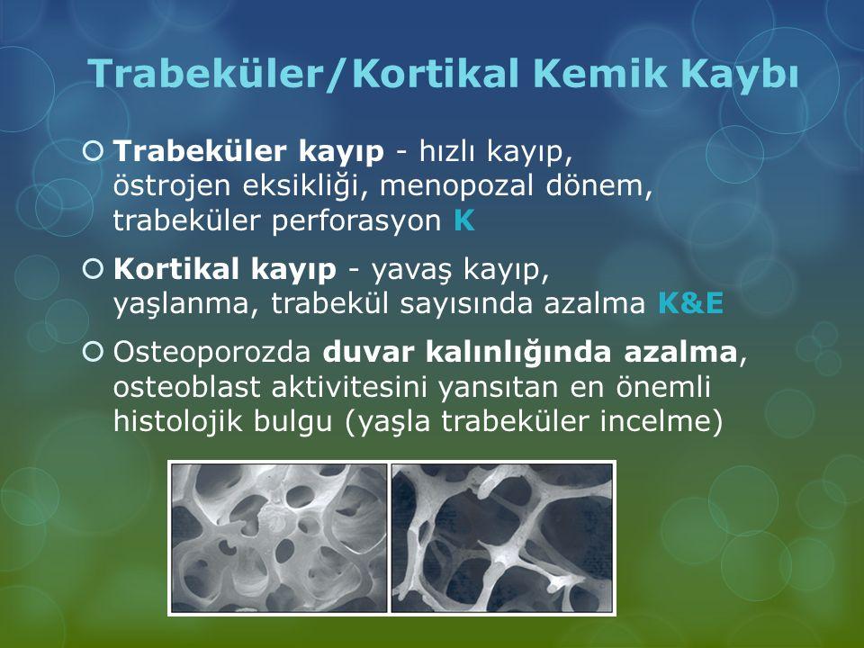 Trabeküler/Kortikal Kemik Kaybı  Trabeküler kayıp - hızlı kayıp, östrojen eksikliği, menopozal dönem, trabeküler perforasyon K  Kortikal kayıp - yav