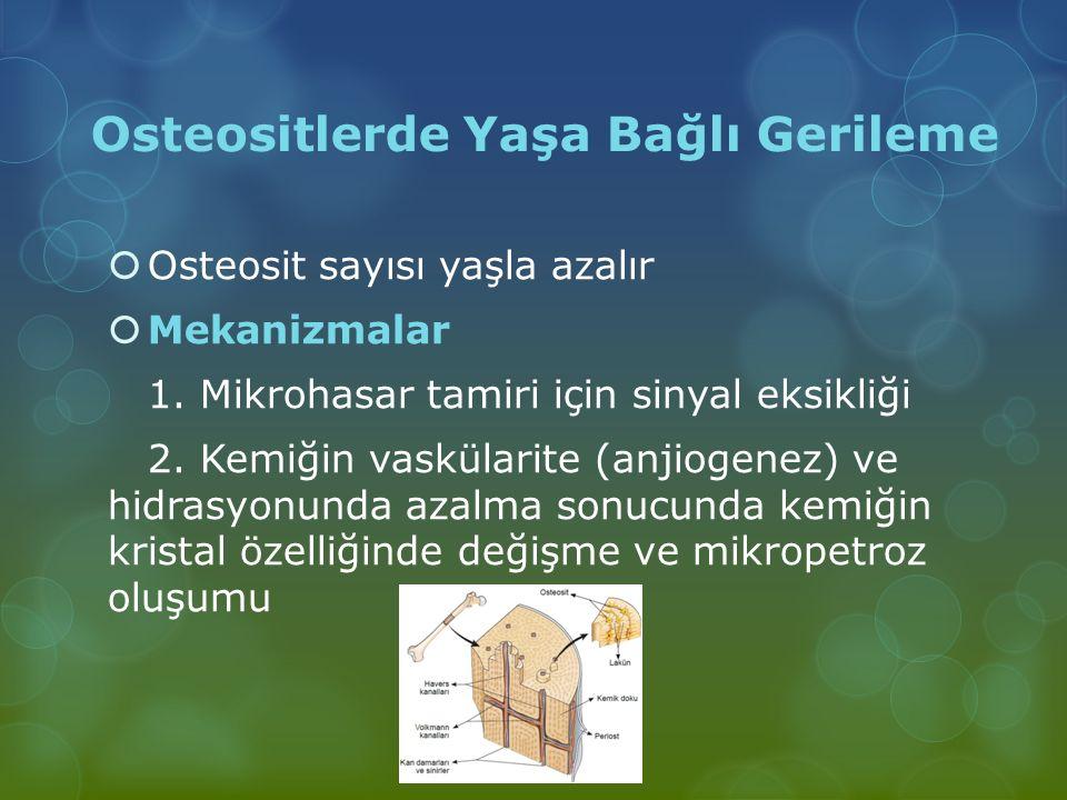 Osteositlerde Yaşa Bağlı Gerileme  Osteosit sayısı yaşla azalır  Mekanizmalar 1. Mikrohasar tamiri için sinyal eksikliği 2. Kemiğin vaskülarite (anj