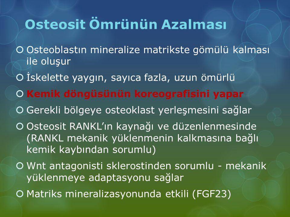 Osteosit Ömrünün Azalması  Osteoblastın mineralize matrikste gömülü kalması ile oluşur  İskelette yaygın, sayıca fazla, uzun ömürlü  Kemik döngüsün