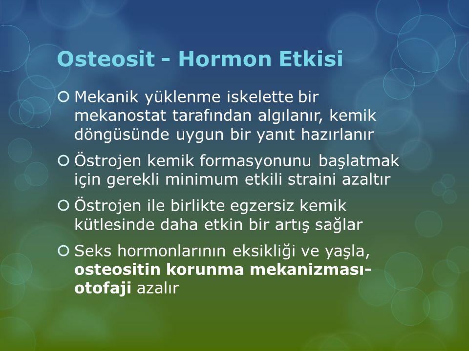 Osteosit - Hormon Etkisi  Mekanik yüklenme iskelette bir mekanostat tarafından algılanır, kemik döngüsünde uygun bir yanıt hazırlanır  Östrojen kemi