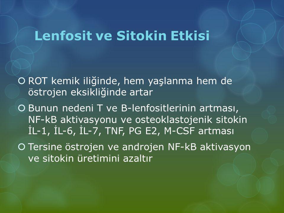 Lenfosit ve Sitokin Etkisi  ROT kemik iliğinde, hem yaşlanma hem de östrojen eksikliğinde artar  Bunun nedeni T ve B-lenfositlerinin artması, NF-kB
