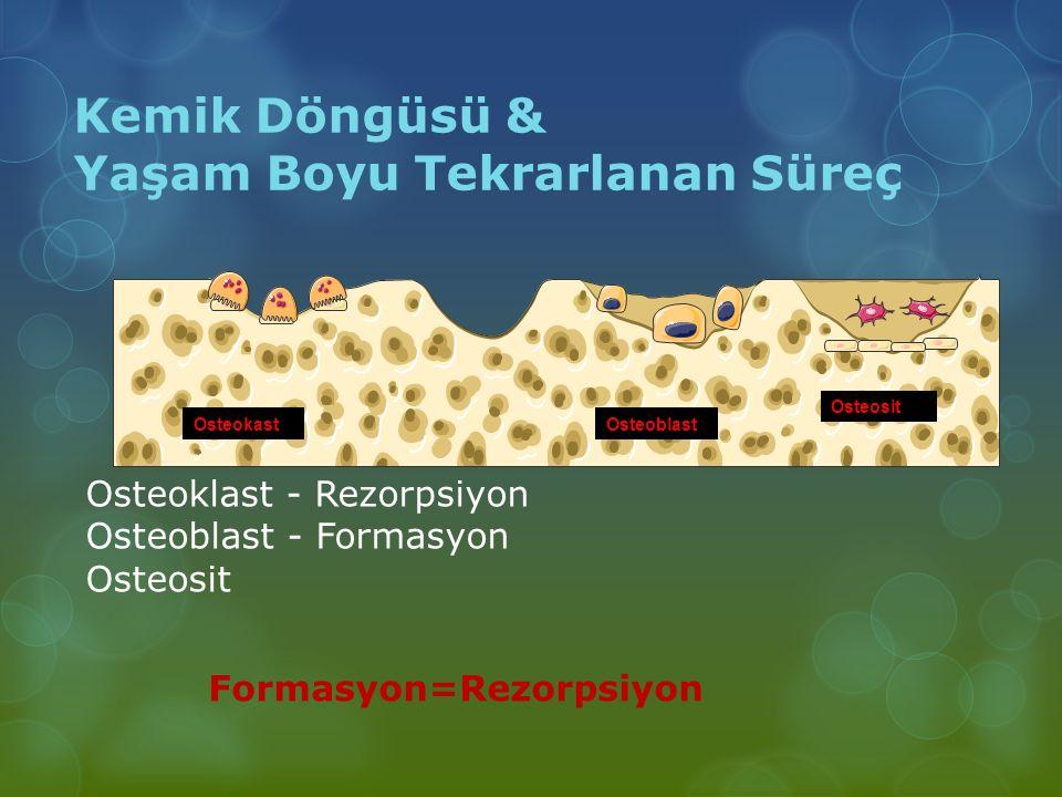 OsteokastOsteoblast Osteosit Kemik Döngüsü & Yaşam Boyu Tekrarlanan Süreç Osteoklast - Rezorpsiyon Osteoblast - Formasyon Osteosit Formasyon=Rezorpsiy