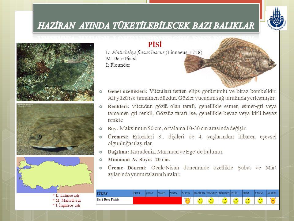 PİSİ L: Platichthys flesus luscus (Linnaeus, 1758) M: Dere Pisisi İ: Flounder  Genel özellikleri: Vücutları üstten elips görünümlü ve biraz bombelidi