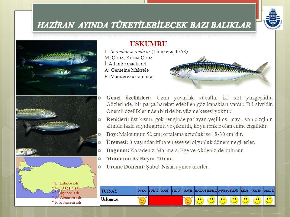 USKUMRU L: Scomber scombrus (Linnaeus, 1758) M: Çiroz, Kırma Çiroz İ: Atlantic mackerel A: Gemeine Makrele F: Maquereau commun  Genel özellikleri: Uz