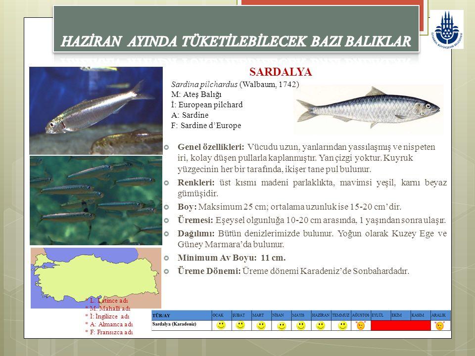 SARDALYA Sardina pilchardus (Walbaum, 1742) M: Ateş Balığı İ: European pilchard A: Sardine F: Sardine d'Europe  Genel özellikleri: Vücudu uzun, yanla